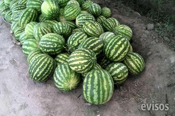 Fotos de Vendo finca en mendoza (8 hectareas) 6