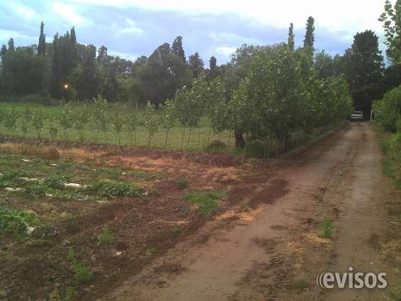 Vendo finca en mendoza (8 hectareas)