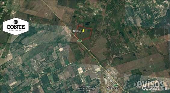 Vendo campo agricola 126 has