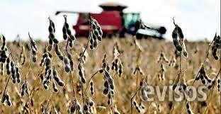 Vendo 80 hectaria agrícolas