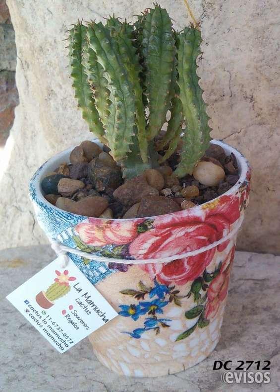 Cactus para souvenirs y decoración