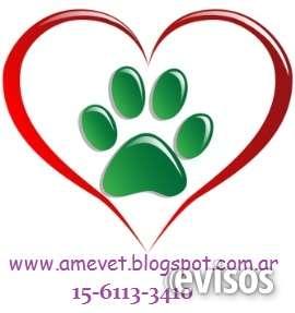 Homeopatía veterinaria y terapia floral de bach