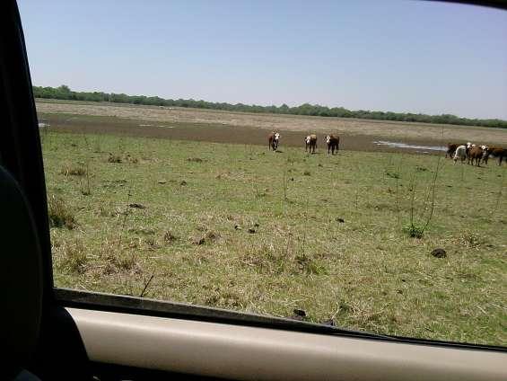 ¡¡ vendo excelente campo zona de sauce-corrientes !!!