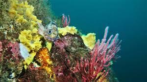 Entre las actividades recreativas que ofrece el lugar se encuentra bucear entre la biodiversidad única existente en este sector del mar