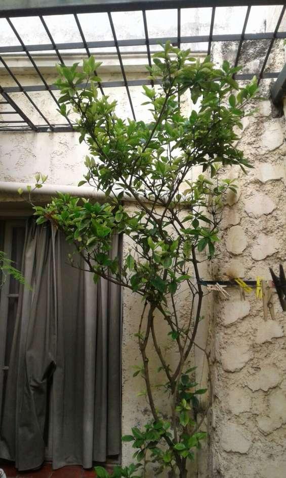 Fotos de Alquiler casa ciudad-quinta mendoza, 4 dorm. 2 baños cocheras 5