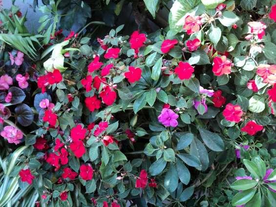 Jardinería diseños sanidad vegetal jardines hue