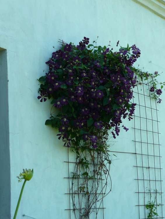 Fotos de Jardinería & paisajismo jardines hue 1