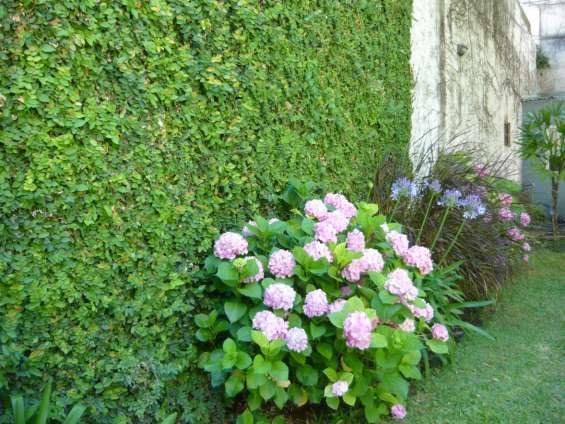 Fotos de Jardinería & paisajismo 6