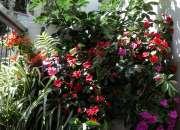 Jardinero y sanidad vegetal