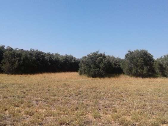 Compro campo c/ olivos/viñas