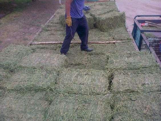Fardos de alfalfa santiagueña