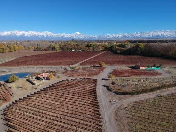 Cabaña del alto san jose tupungato mendoza alquiler turistico y vinos